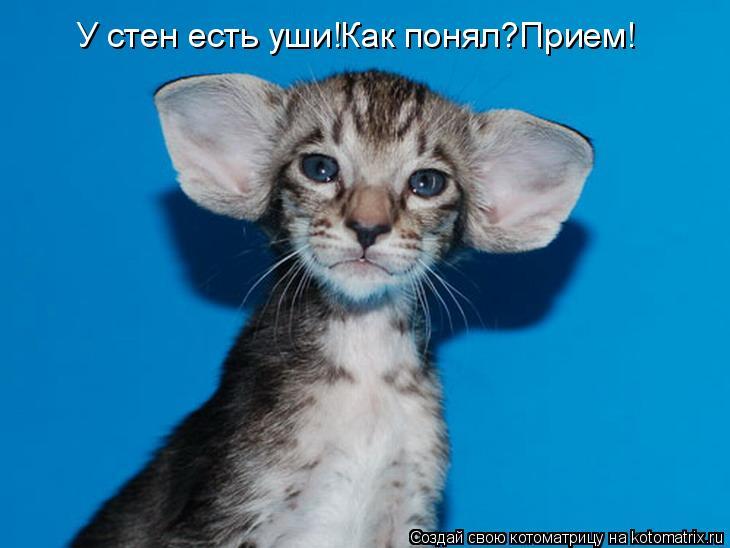 Котоматрица: У стен есть уши!Как понял?Прием!
