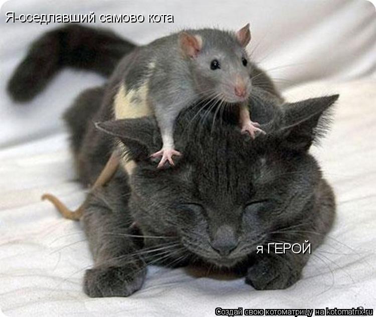 Котоматрица: Я-оседлавший самово кота я ГЕРОЙ