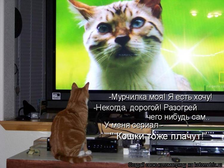 """Котоматрица: -Мурчилка моя! Я есть хочу! -Некогда, дорогой! Разогрей чего нибудь сам.. У меня сериал - """" Кошки тоже плачут!"""""""
