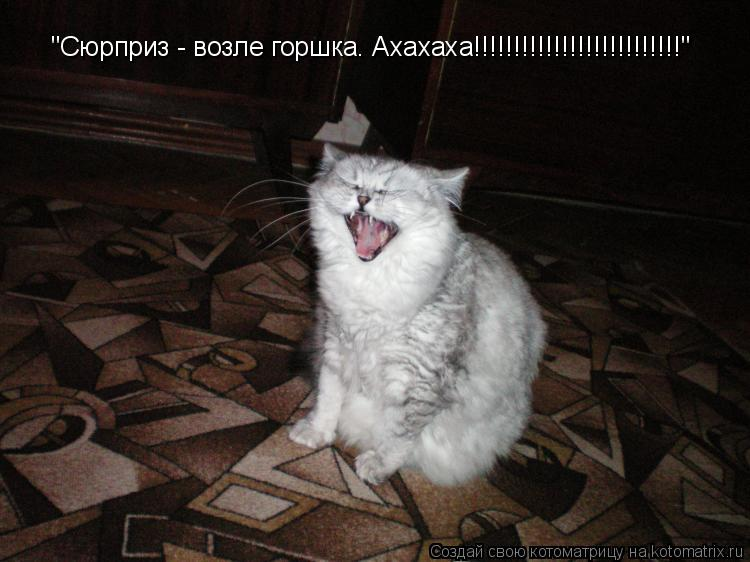 "Котоматрица: ""Сюрприз - возле горшка. Ахахаха!!!!!!!!!!!!!!!!!!!!!!!!!!"""