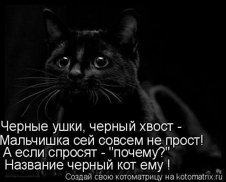 """Котоматрица: Черные ушки, черный хвост -  Мальчишка сей совсем не прост!  А если спросят - """"почему?""""  Название черный кот ему !"""