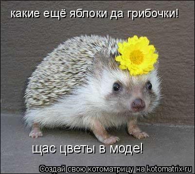 Котоматрица: какие ещё яблоки да грибочки! щас цветы в моде!