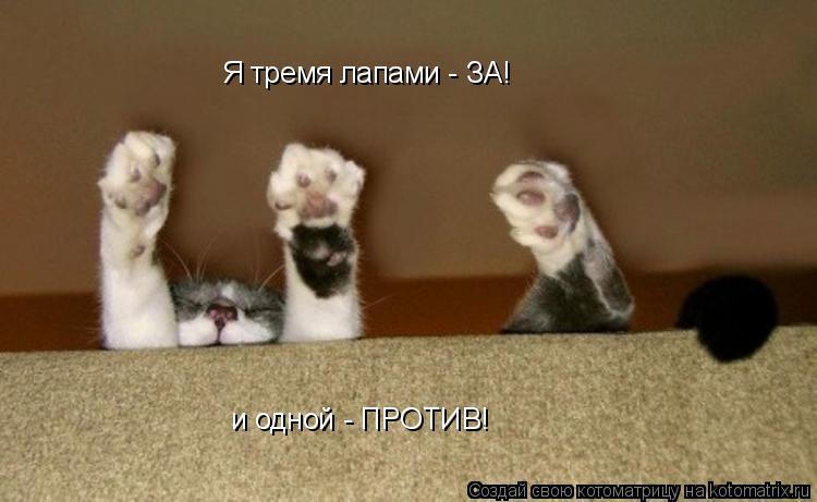 Котоматрица: и одной - ПРОТИВ! Я тремя лапами - ЗА!