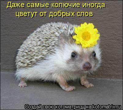 Котоматрица: Даже самые колючие иногда цветут от добрых слов