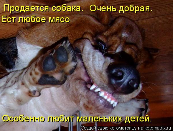 Котоматрица: Продается собака. Очень добрая. Ест любое мясо Особенно любит маленьких детей. Особенно любит маленьких детей.