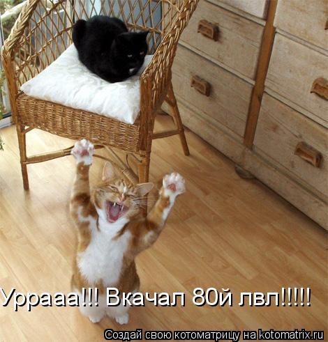 Котоматрица: Уррааа!!! Вкачал 80й лвл!!!!!