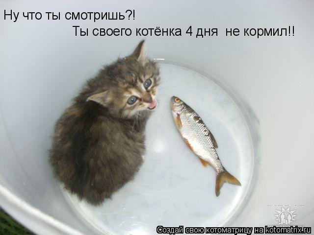 Котоматрица: Ну что ты смотришь?! Ты своего котёнка 4 дня  не кормил!!