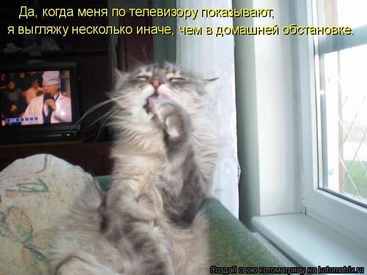 Котоматрица: Да, когда меня по телевизору показывают, я выгляжу несколько иначе, чем в домашней обстановке.