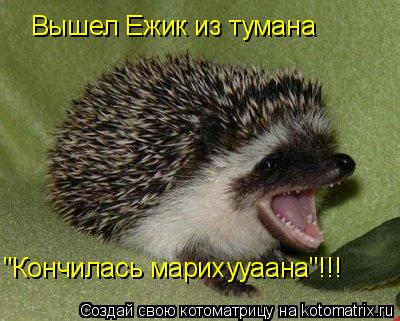 "Котоматрица: Вышел Ежик из тумана ""Кончилась марихууаана""!!!"