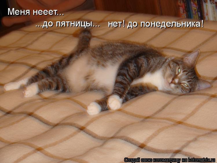 Котоматрица: Меня нееет... ...до пятницы... нет! до понедельника!