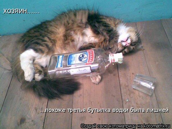 Котоматрица: хозяин...... ...похоже третья бутылка водки была лишней