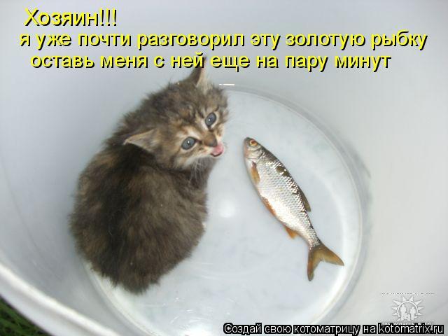 Котоматрица: Хозяин!!! я уже почти разговорил эту золотую рыбку оставь меня с ней еще на пару минут