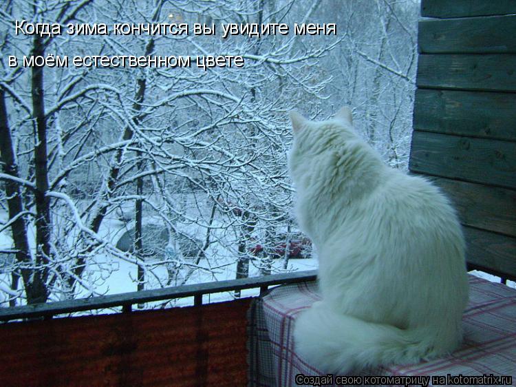 Котоматрица: Когда зима кончится вы увидите меня  Когда зима кончится вы увидите меня  в моём естественном цвете
