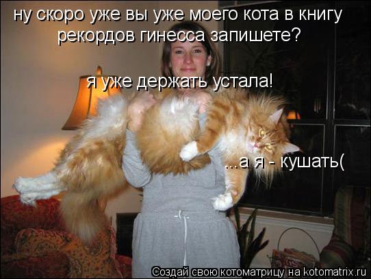 Котоматрица: ну скоро уже вы уже моего кота в книгу  рекордов гинесса запишете? я уже держать устала! ...а я - кушать(