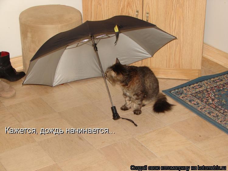 Котоматрица: Кажется, дождь начинается...