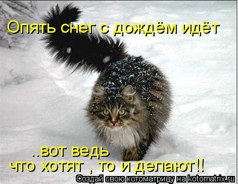 Котоматрица: Опять снег с дождём идёт ..вот ведь что хотят , то и делают!!