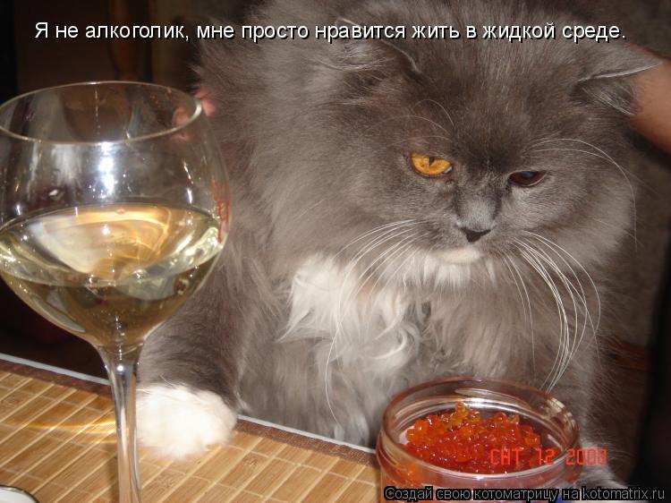 Котоматрица: Я не алкоголик, мне просто нравится жить в жидкой среде.