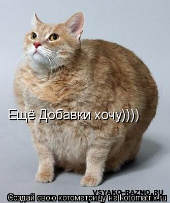 Котоматрица: Ещё Добавки хочу))))