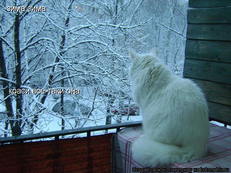 Котоматрица: зима зима краси всё-таки она