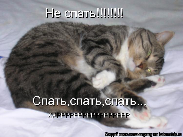 Котоматрица: ХХРРРРРРРРРРРРРРРРР Не спать!!!!!!!! Спать,спать,спать...