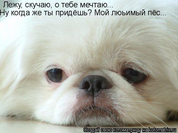 Котоматрица: Лежу, скучаю, о тебе мечтаю... Ну когда же ты придёшь? Мой люьимый пёс...