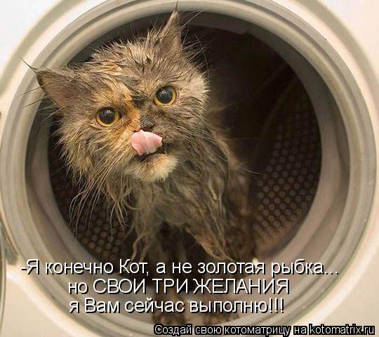Котоматрица: -Я конечно Кот, а не золотая рыбка... но СВОИ ТРИ ЖЕЛАНИЯ я Вам сейчас выполню!!!