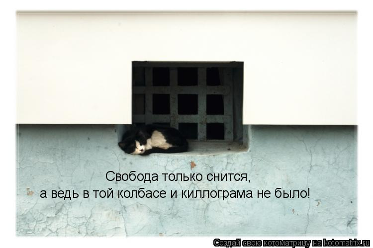 Котоматрица: Свобода только снится,  а ведь в той колбасе и киллограма не было!