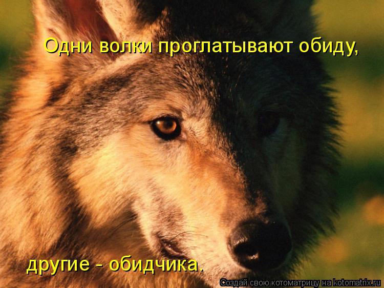 Котоматрица: Одни волки проглатывают обиду,  другие - обидчика.