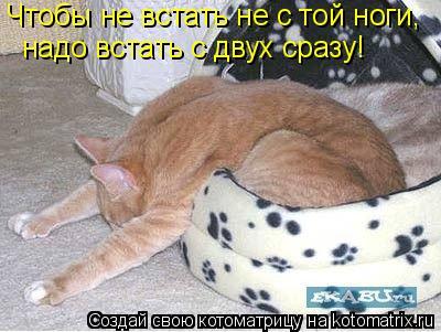 Котоматрица: Чтобы не встать не с той ноги, надо встать с двух сразу!