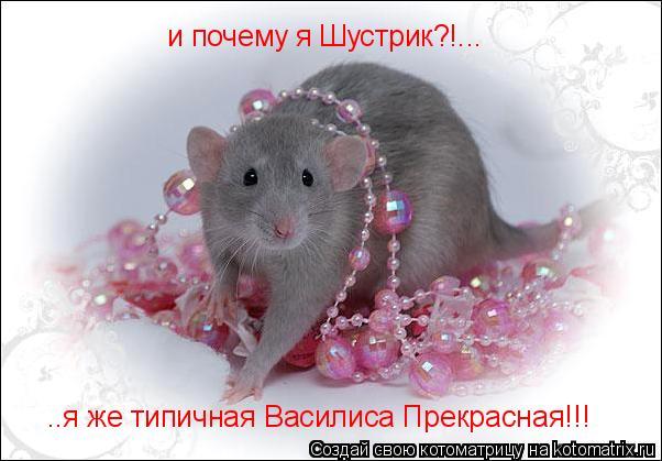 Котоматрица: и почему я Шустрик?!... ..я же типичная Василиса Прекрасная!!!