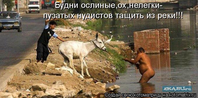Котоматрица: Будни ослиные,ох,нелегки- пузатых нудистов тащить из реки!!!