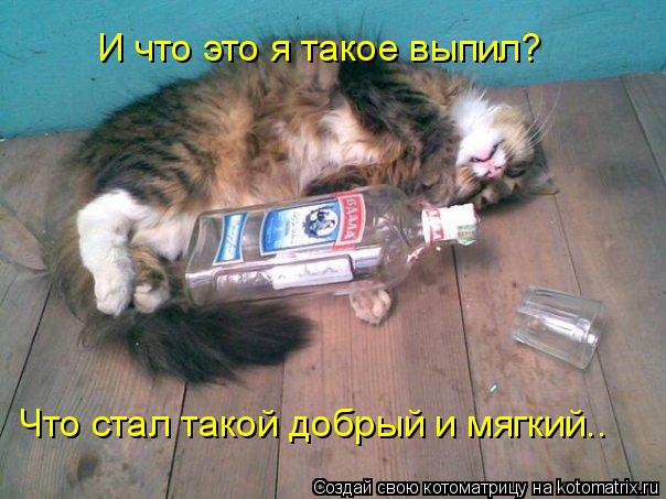 Котоматрица: И что это я такое выпил? Что стал такой добрый и мягкий..