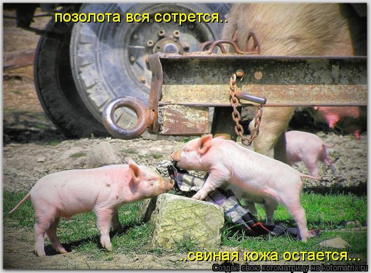 Котоматрица: позолота вся сотрется.. ..свиная кожа остается...