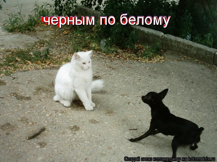 Котоматрица: черным по белому