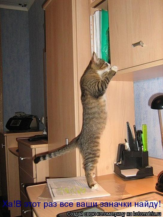 Котоматрица: Ха!В этот раз все ваши заначки найду!