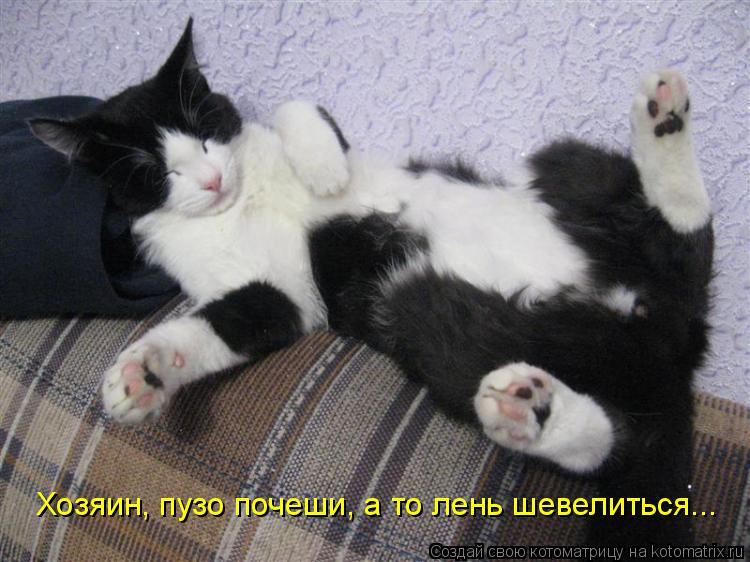 Котоматрица: Хозяин, пузо почеши, а то лень шевелиться...