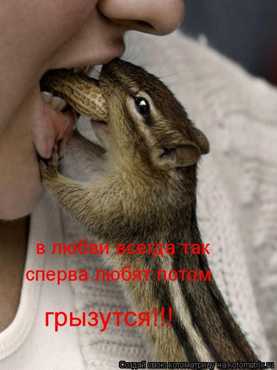 Котоматрица: в любви всегда так  сперва любят потом  грызутся!!!