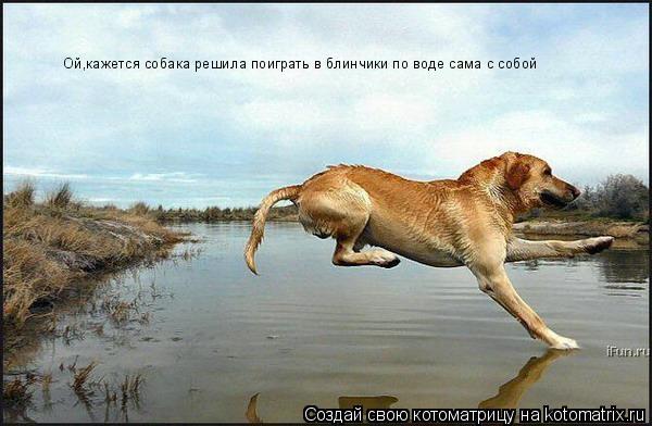 Котоматрица: Ой,кажется собака решила поиграть в блинчики по воде сама с собой