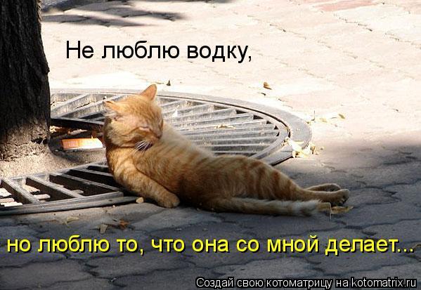 Котоматрица: Не люблю водку,  но люблю то, что она со мной делает...