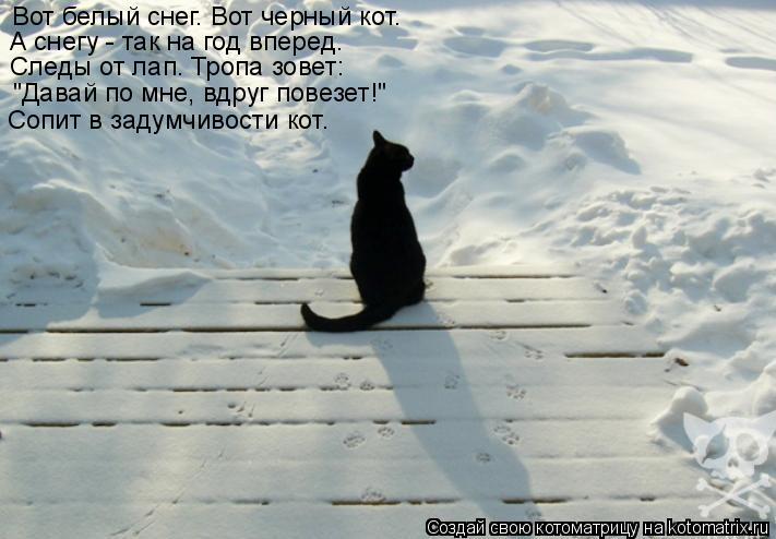 """Котоматрица: Вот белый снег. Вот черный кот. А снегу - так на год вперед. Следы от лап. Тропа зовет: """"Давай по мне, вдруг повезет!"""" Сопит в задумчивости кот."""