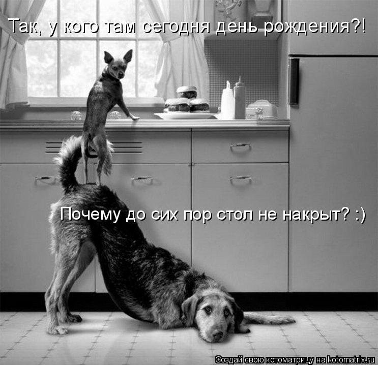 Котоматрица: Так, у кого там сегодня день рождения?! Почему до сих пор стол не накрыт? :)