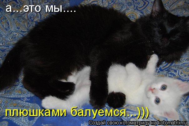 Котоматрица: а...это мы.... плюшками балуемся...)))