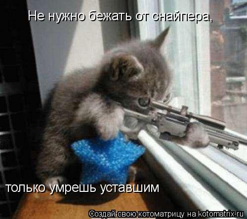 Котоматрица: Не нужно бежать от снайпера,  только умрешь уставшим