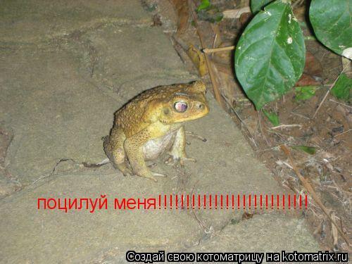 Котоматрица: поцилуй меня!!!!!!!!!!!!!!!!!!!!!!!!!!!