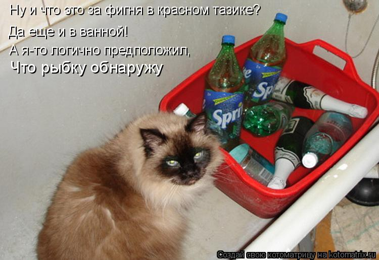Котоматрица: Да еще и в ванной!  Ну и что это за фигня в красном тазике?  А я-то логично предположил, Что рыбку обнаружу