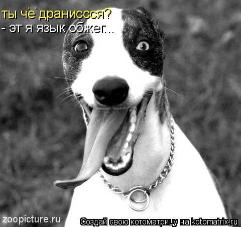 Котоматрица: ты че драниссся? : - эт я язык обжег...