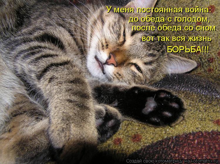 Котоматрица: У меня постоянная война: до обеда с голодом, после обеда со сном вот так вся жизнь БОРЬБА!!!