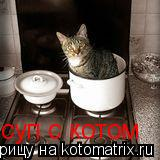 Котоматрица: суп с котом