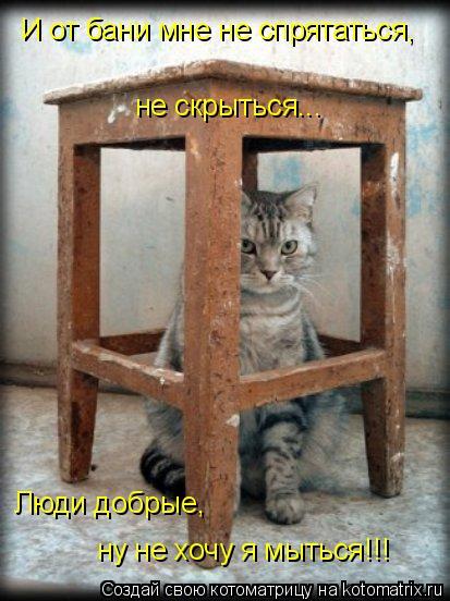 Котоматрица: И от бани мне не спрятаться, не скрыться... Люди добрые, ну не хочу я мыться!!!