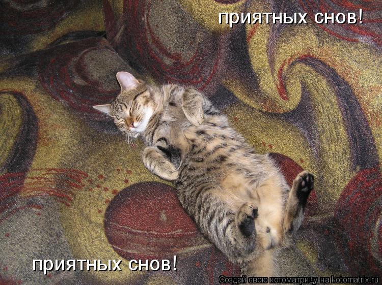 Котоматрица: приятных снов! приятных снов!